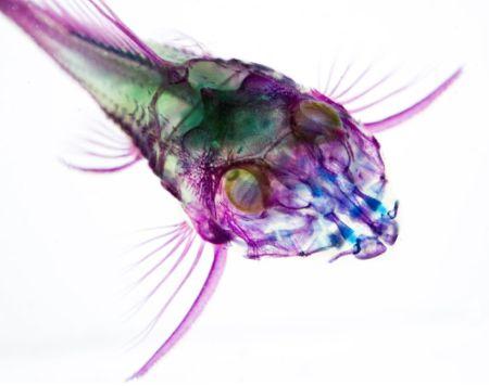 仿X光透明生物标本创意设计