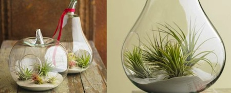 水果玻璃盆栽创意设计