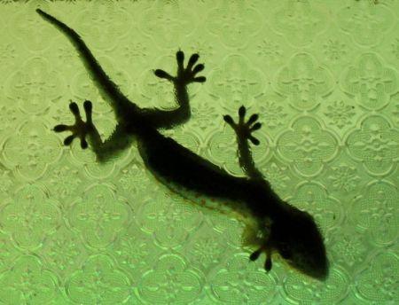 基尔大学推出超强力生物感应粘性胶带创意设计