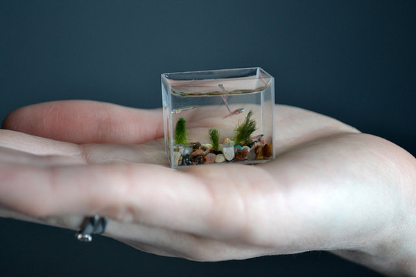 袖珍鱼缸创意设计