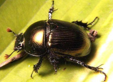自发电的机械昆虫创意设计