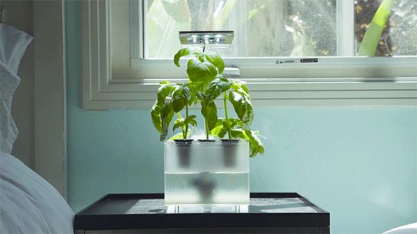 无需泥土的FogBox雾化培植箱创意设计