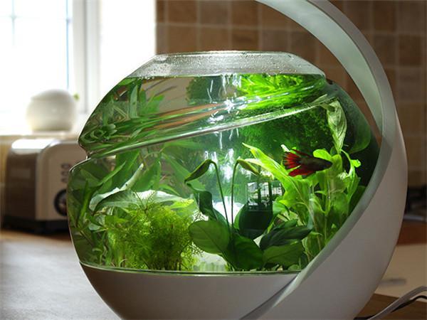自动净化鱼缸创意,Avo创意设计