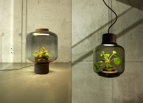 玻璃瓶灯具里的自循环生态创意设计