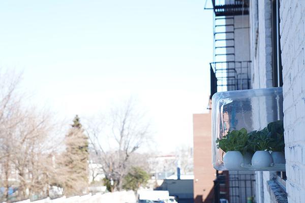 挂在窗户上的盆栽创意设计