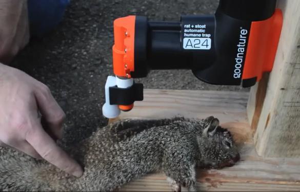 超级捕鼠神器创意设计创意,10天捕120只老鼠