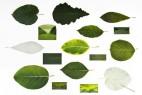 创意绿叶信笺创意设计