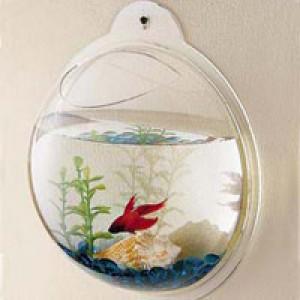 可以吊挂在墙壁上的金鱼缸创意设计
