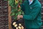 番茄&土豆混种创意设计