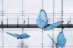 Festo公司的机械蝴蝶创意设计