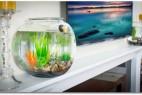 自动排污换水的鱼缸创意设计